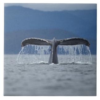 Humpback Whale 2 Tile