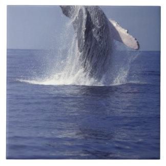 Humpback whale breaching (Megaptera Large Square Tile