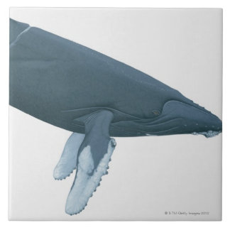 Humpback Whale Large Square Tile