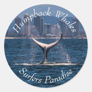 Humpback Whale Off Surfers Paradise Australia Classic Round Sticker