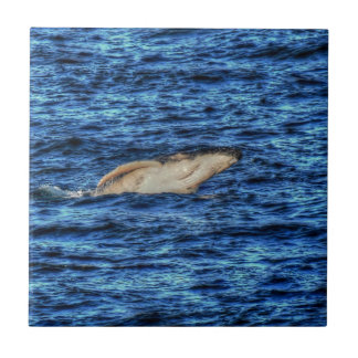 HUMPBACK WHALE QUEENSLAND AUSTRALIA ART EFFECTS SMALL SQUARE TILE