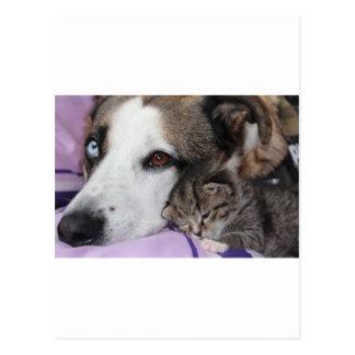 Hund Katze Freundschaft Postkarten
