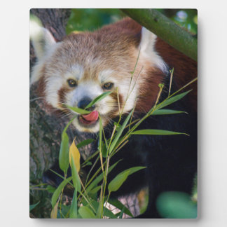 hungry Red panda Plaque
