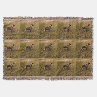 Hunting Plott Hound Throw Blanket