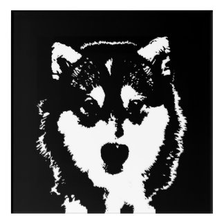 Husky Black & White Acrylic Wall Art