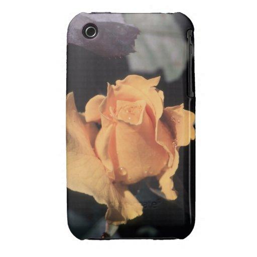 Hybrid Tea Rose Midas Touch iPhone 3 Case-Mate Case
