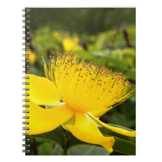 Hypericum Calcyinum Spiral Photo Notebook