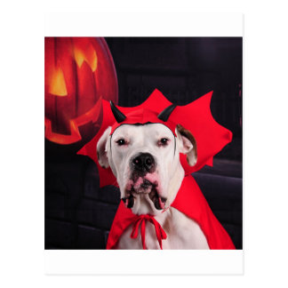 I am not a Devil Dog! Postcard