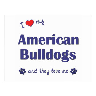 I Love My American Bulldogs (Many Dogs) Postcard