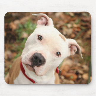 I love my Pittbull terrier Mouse Pad