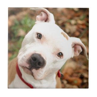 I love my Pittbull terrier Tile