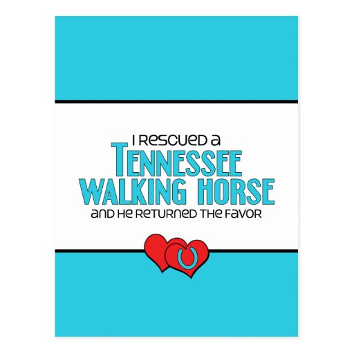 I Rescued a Tennessee Walking Horse (Male Horse) Postcard