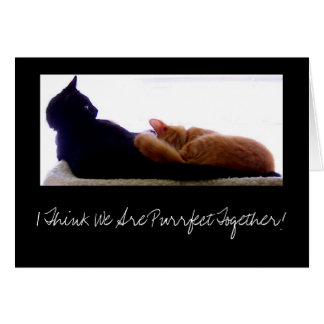 I Think We Are Purrfect Together! Card