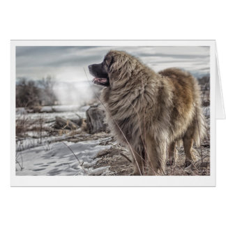 Ice cold Leonberger greeting card