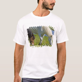 Icelandic Horses in western Iceland. T-Shirt