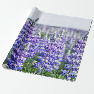 Icelandic Lupine Fields Wrapping Paper
