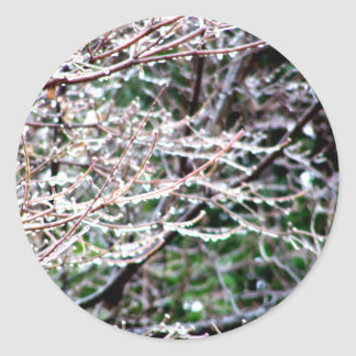 Icy Dogwood Classic Round Sticker