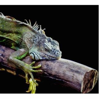 Iguana Acrylic Cut Out