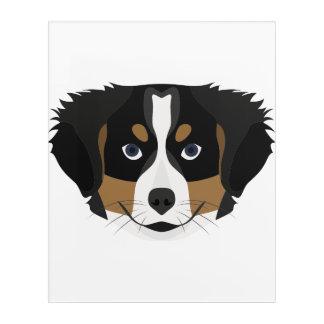 Illustration Bernese Mountain Dog Acrylic Wall Art
