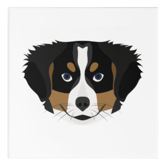 Illustration Bernese Mountain Dog Acrylic Wall Art
