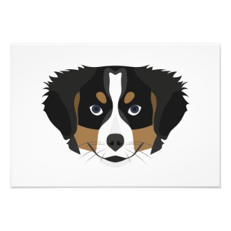 Illustration Bernese Mountain Dog Photo Print