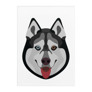 Illustration dogs face Siberian Husky Acrylic Wall Art