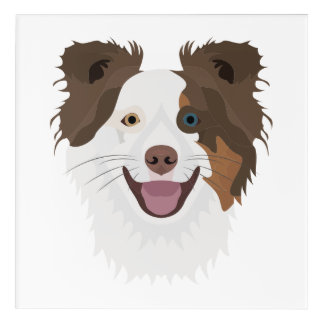 Illustration happy dogs face Border Collie Acrylic Wall Art