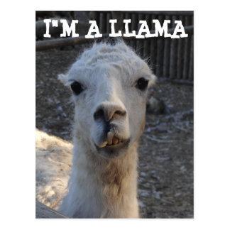 I'm a Llama Postcard