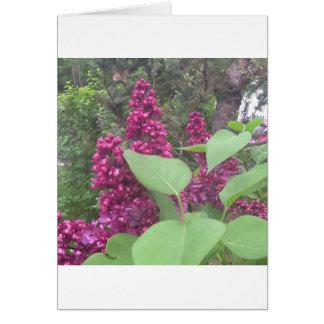 image.jpg lilacs greeting card