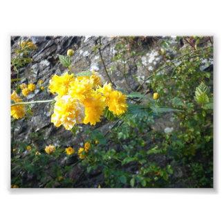 image of a beautiful flowers photo art