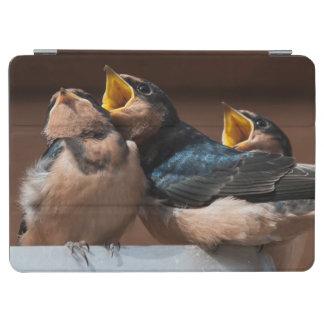Immature Barn Swallow (Hirundo Rustica) iPad Air Cover