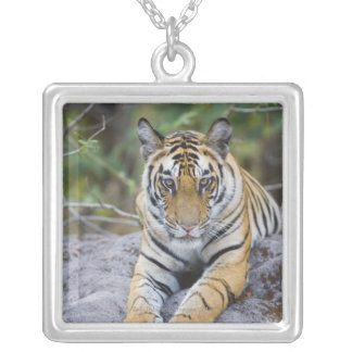 India, Bandhavgarh National Park, tiger cub Silver Plated Necklace