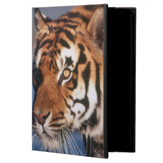 India, Bengal Tiger (Panthera Tigris) 2 Cover For iPad Air