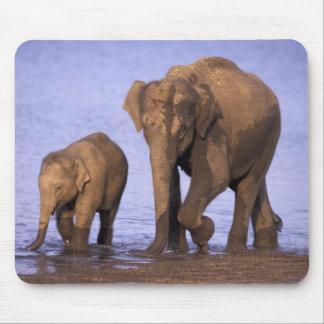 India, Nagarhole National Park. Asian elephant Mouse Pad