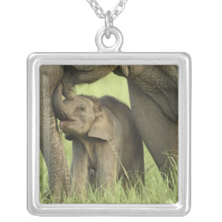 Indian / Asian Elephant and young one,Corbett 2 Silver Plated Necklace