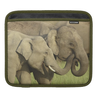 Indian / Asian Elephants sharing a iPad Sleeve