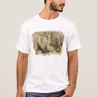 Indian / Asian Elephants sharing a T-Shirt