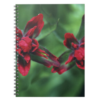 Indian Paintbrush, Banff NP, Alberta, Canada 2 Spiral Notebook