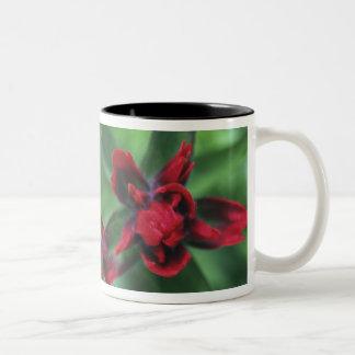 Indian Paintbrush, Banff NP, Alberta, Canada 2 Two-Tone Coffee Mug