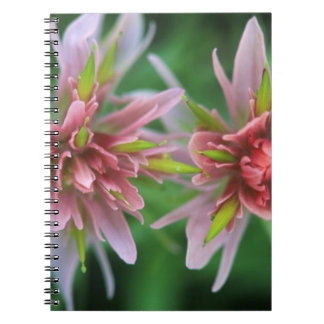 Indian Paintbrush, Banff NP, Alberta, Canada Spiral Notebook