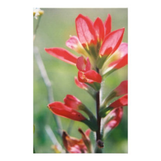 Indian Paintbrush Stationery