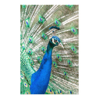 Indian Peacock Stationery