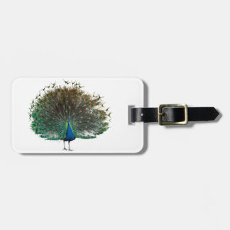 Indian peafowl luggage tag