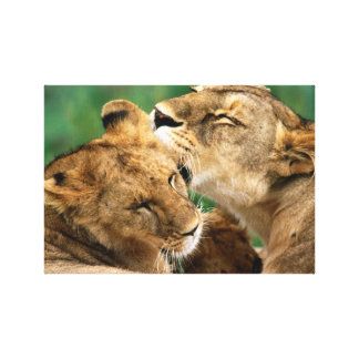 InspireMe Collecshions. Intiguing Lions of Kenya Canvas Print