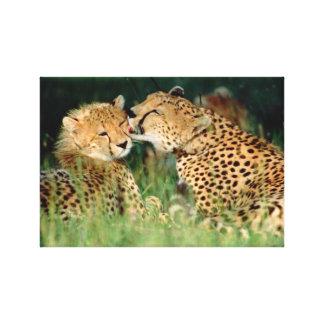 InspireMe Collecshions. Kenyas Cheetah of Savannah Canvas Print