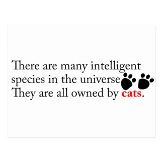 Intelligent Cats Own Us Postcard