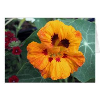Intense Yellow-Orange Nasturtium Card