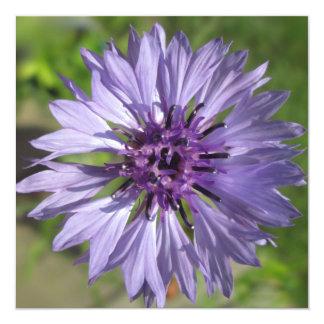 Invitation - Lilac/Purple Bachelor's Button