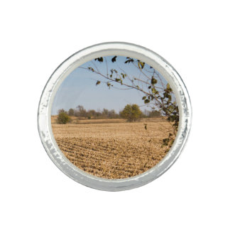 Iowa Cornfield Panorama Photo v2