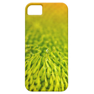 iPhone 5 Sunflower Closeup iPhone 5 Cases